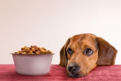 Как кормить собаку зимой?